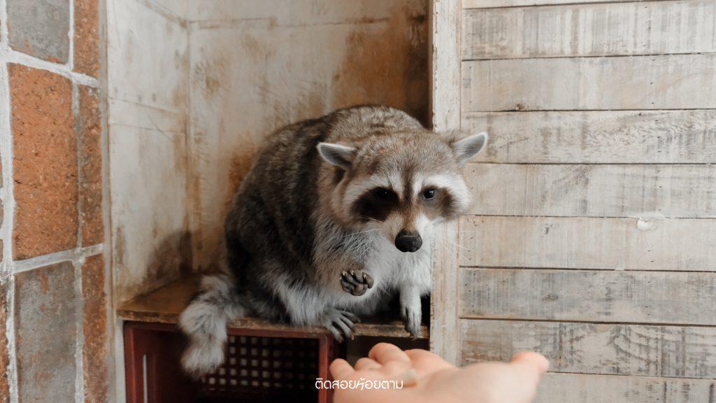 cafe raccoon in busan